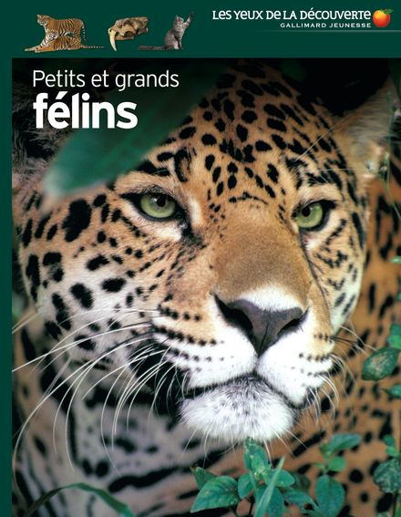 Petits et grands félins - Juliet Clutton-Brock