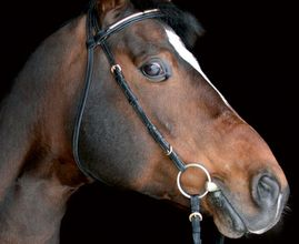 Des livres pour les amoureux des chevaux (À partir de 9 ans)