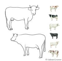 Coloriage Vache