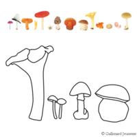 Les champignons 2